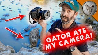 Download Gator Ate My Camera! Video