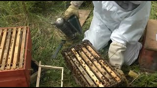 Download Beekeeping - How to make lots more Bees - Using the Rose Hive Method Part 3 Video