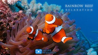 Download 3HRS Stunning Underwater Footage + Relaxing Music   French Polynesia, Indonesia 4K Upscale Video