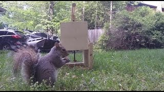 Download How to Make a Squirrel Trap - DIY catch alive trap Video