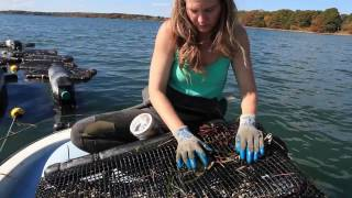 Download Getting Started in Shellfish and Seaweed Aquaculture Video
