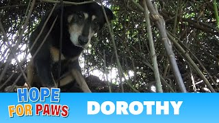 Download Hope For Paws: Dorothy a Senior Dog Bites Her Rescuer But Then Makes an Incredible Transformation. Video