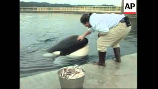 Download USA: OREGON: KILLER WHALE KEIKO IS DOING WELL IN HIS NEW HOME Video