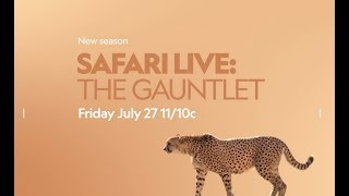 Download safariLIVE: The Gauntlet comes to you LIVE from the African wilderness on Nat Geo WILD! Video