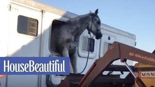 Download Watch This Horse Escape From a Trailer   House Beautiful Video