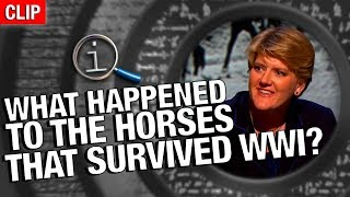 Download QI | What Happened To The Horses That Survived WW1? Video