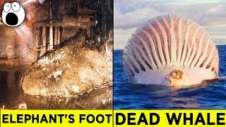 Download Top 10 Alarming Discoveries You'll be Glad You Didn't Make Video