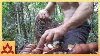 Download Primitive Technology: Making poisonous Black bean safe to eat (Moreton Bay Chestnut) Video