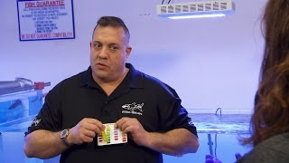 Download How To Care For Your Saltwater Aquarium   Tanked Video