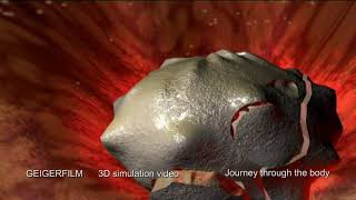 Download Journey trough the human body in 3D Flight & Motion simulation Video