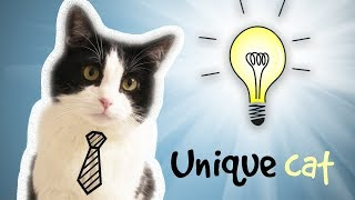 Download CAT WHO… CAN DO INCREDIBLE THINGS !! Video