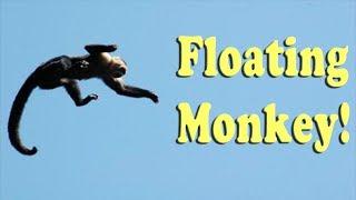 Download Making a Monkey Levitate Video