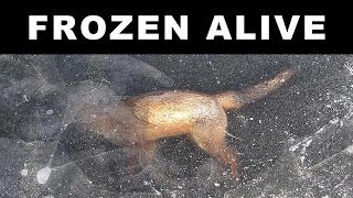 Download ANIMALS FOUND FROZEN IN ICE Video