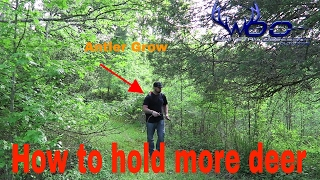 Download How To Hold More Deer On Your Property | Small Hunting Land Video