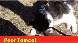 Download Tomcat's Days are Over Video