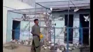 Download USTAD KABOOTAR CHEENA JHELUM MACHIN MUHALA Video