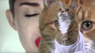 Download Play Miley Cyrus Off, Keyboard Cat! Video