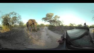 Download Naughty Elephant Video