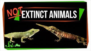 Download 7 Animals We Used to Think Were Extinct (But Aren't!) Video