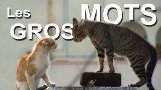 Download LES GROS MOTS - PAROLE DE CHAT Video