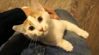 Download Kittens were born 3+ months ago Video
