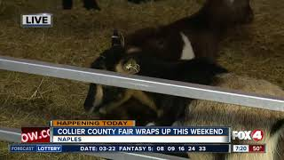 Download Last chance to catch the Collier County Fair this weekend - 7am live report Video