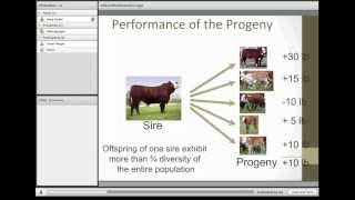 Download Understanding and Utilizing EPDs in the Selection of Sires Video
