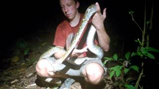 Download Singapore catch-Python p.3 Video
