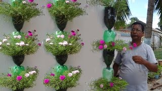 Download Tree planting in hanging bottles on wall Video