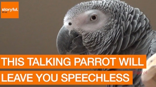Download This Talking Parrot Will Leave You Speechless Video