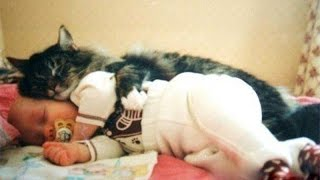 Download Cats and babies cuddling – Cute cat and baby compilation Video