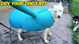 Download Fastest Way to Dry Your Dog! Video