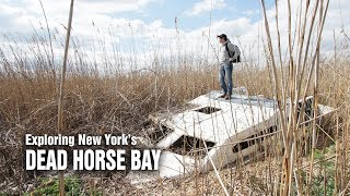 Download Dead Horse Bay - A scavenger's dream Video