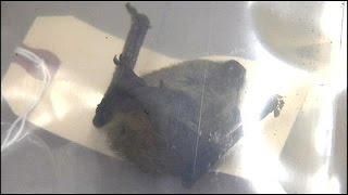 Download Rabid bats Video