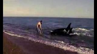 Download Danza con Orcas Video