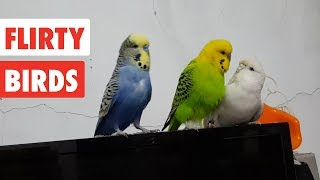 Download Flirty Birds | Funny Bird Video Compilation 2017 Video