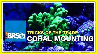 Download Week 38: Mounting corals: epoxy, super glue, and lighting tweaks   52 Weeks of Reefing #BRS160 Video