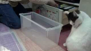 Download 整理整頓の邪魔をする猫 Cat interferes with tidy. Video