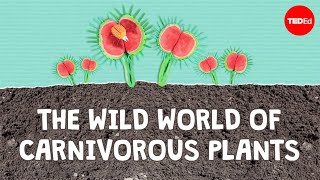 Download The wild world of carnivorous plants - Kenny Coogan Video