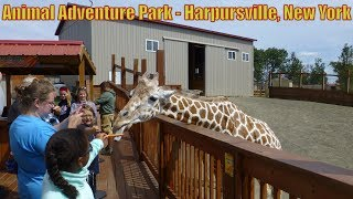 Download ANIMAL ADVENTURE PARK FEATURING APRIL THE GIRAFFE- Harpursville, New York Video