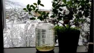 Download Great Salt Lake in a bottle 5 Video