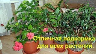 Download Мои цветы и супер подкормка для всех комнатных растений. Video
