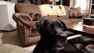 Download Cats Keep Dog Away from Dog Toy   Cat VS Dog Video