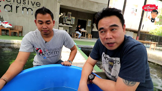 Download เล่าเรื่องปลา ตอนเยี่ยมฟาร์ม The Execulsive Koi Farm Video