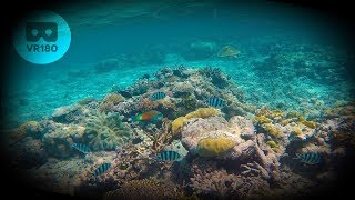 Download VR180 Great Barrier Reef - 2 minute VR Relaxation Meditation for Daydream & Oculus Video