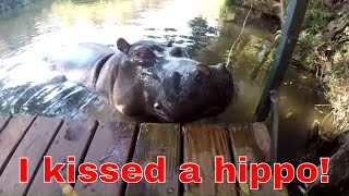 Download Madmongoose African Safari - Jessica the Hippo Video