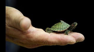 Download Top Funny Small Turtle Videos / Tortoise Videos Compilation - Cute Animals Video