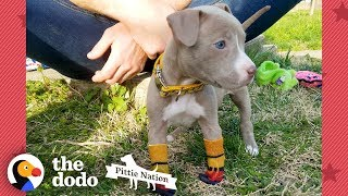 Download Puppy Found In Duffel Bag Is Pure Joy | The Dodo Pittie Nation Video