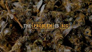 Download Imagine a world without bees Video
