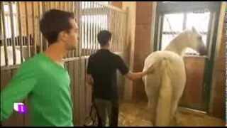 Download Laurent Amann löst mit energetischer Berührung das Trauma eines Pferdes Video